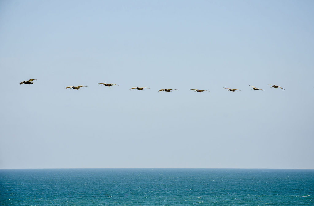 Image overlooking open water with a flock of seagulls coasting in a line.